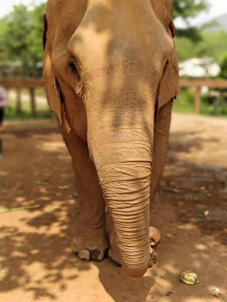 Tailandia Elephant Nature Park