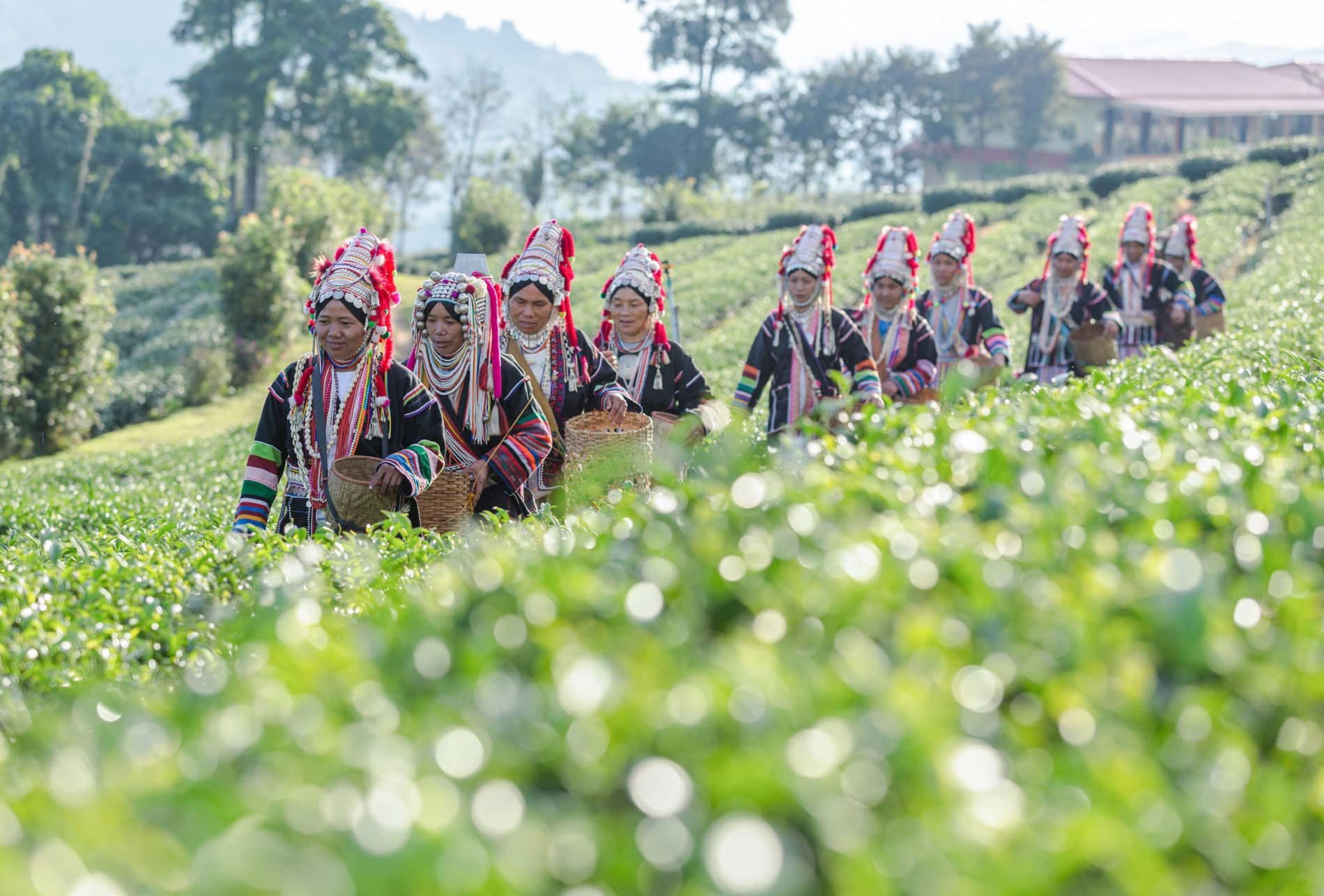 Tailandia pueblos tribales triangulo de oro