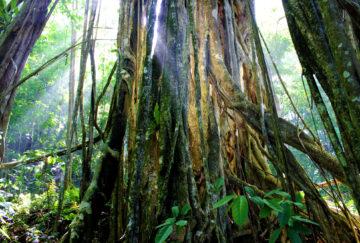 Viaje a Costa Rica. A medida Nomads. Huellas aborígenes y el exuberante Corcovado