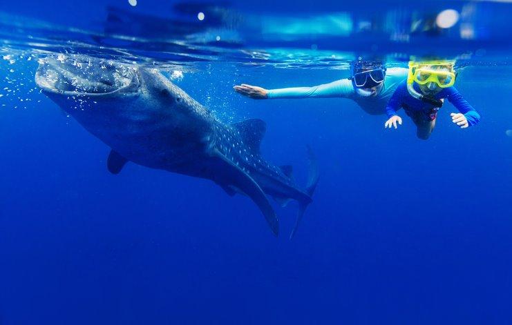 Filipinas nadar con tiburones y ballenas